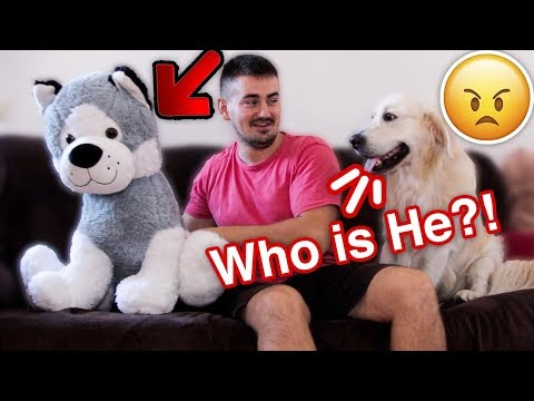 Funny Dog Reacts to My Hugs with Stuffed Toy Dog [TRY NOT TO LAUGH]