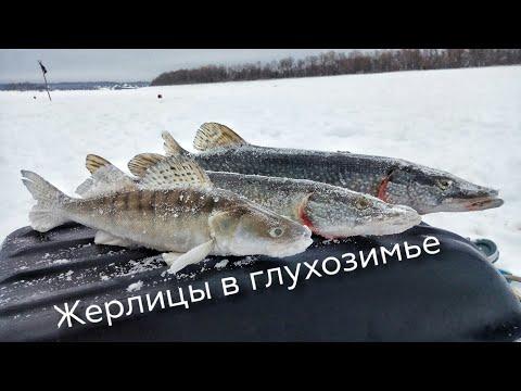 Щука, судак, жерлицы. Рыбалка на Иртыше.