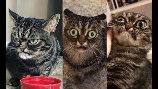 Эта кошка пугает своим взглядом всех, кто её видит, но на самом деле она сама доброта!