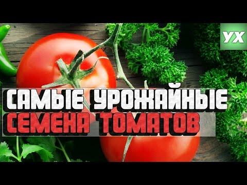 видео: Самые урожайные семена томатов