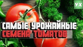 Самые урожайные семена томатов