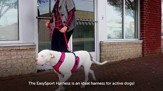 Easy On And Off Harness with Quick Control Handle