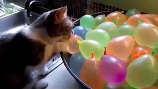 Funny Cats Video || HD || Ashkur