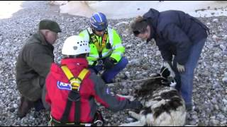 Rescue of sheep stuck on cliffs at Thornwick Bay, Flamborough