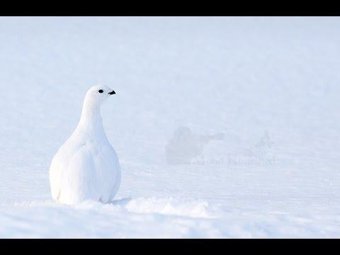 رحلة تصوير طيور فنلندا Finland birds photography trip