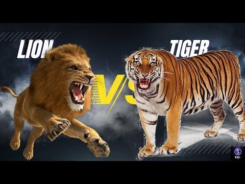Tarihe geçmiş inanılmaz Aslan Kaplan kavgası(Lion vs Tiger)
