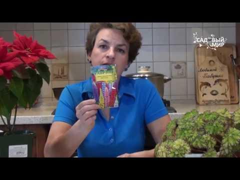 Как выращивать люпин