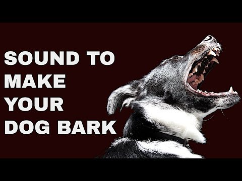 sound-to-make-your-dog-bark-&-whine