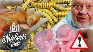 LEBENDIGE FUTTERTIERE | KANINCHEN UND KÜKEN ALS FUTTER - MUSS DAS SEIN? | NORBERTS WELT | Zoo Zajac