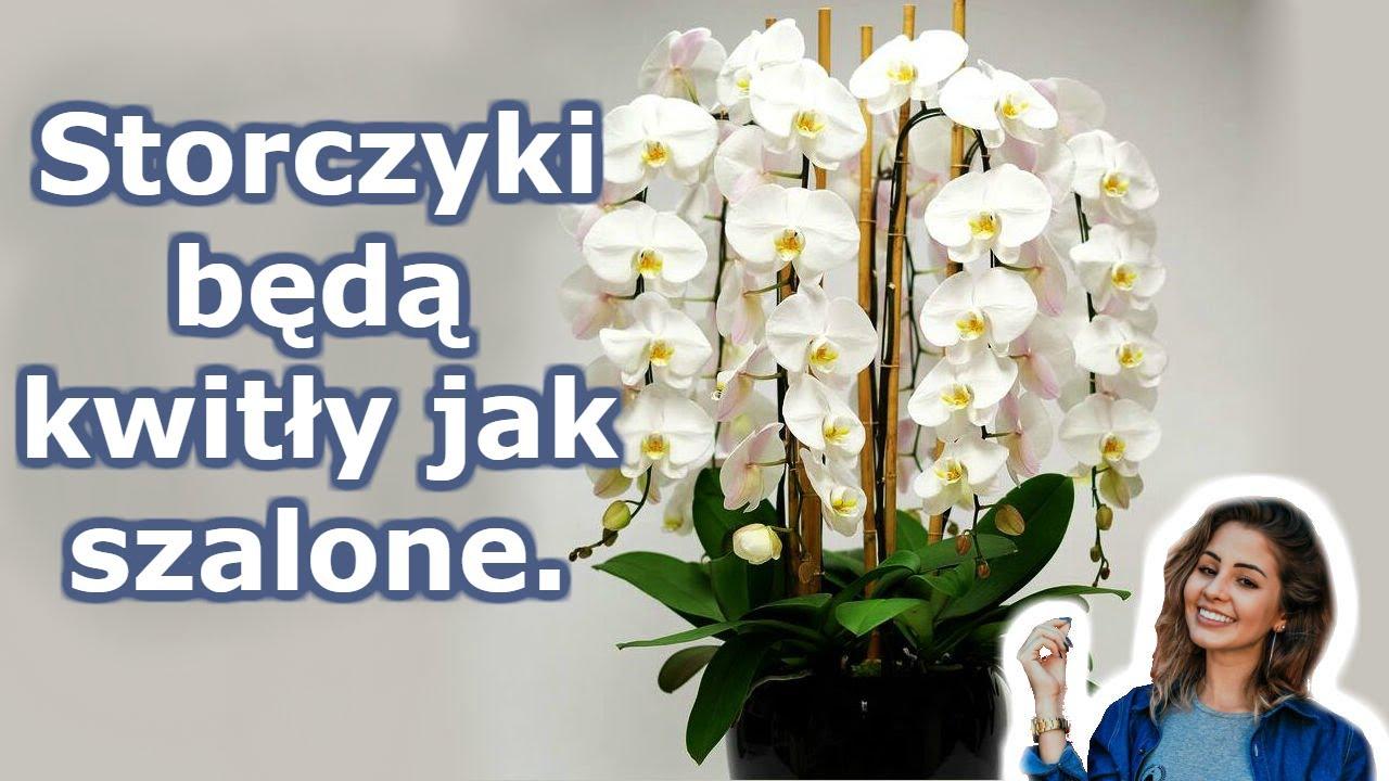 Download A twoja orchidea zakwitnie przez cały rok. 7 ważnych sekretów pielęgnacji storczyków