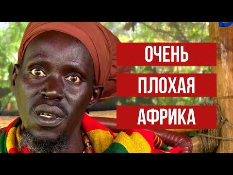 Вопрос: Броненосец из Африки – это кто, что о нём известно?