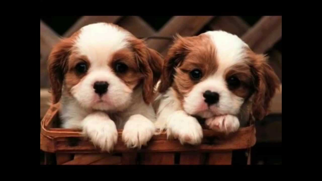 dogs pictures of dogs - YouTube
