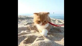 Video Lucu Kucing Lucu