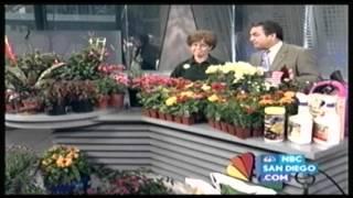 Armstrong Garden Centers - Summer Gardening Tips NBC 7/39 San Diego