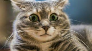 Тайны и секреты котов (не официальное видео)