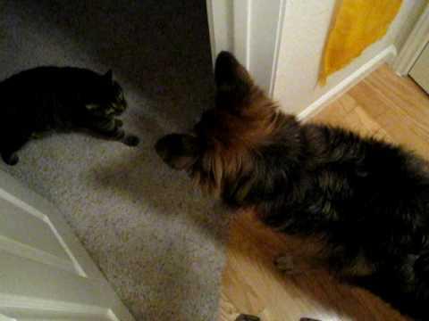 Cat meets Dog