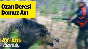 Ozan Deresi Domuz Avı  Av ve Atış Sanatı - Yaban Tv - Wildboar Hunting - Dev Azılı Domuz Saldırısı