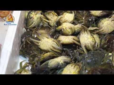 Il Mercato del Pesce al minuto | Lidi di Chioggia (HD)