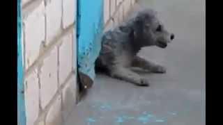 Коты- спасатели,собака спасает кота!