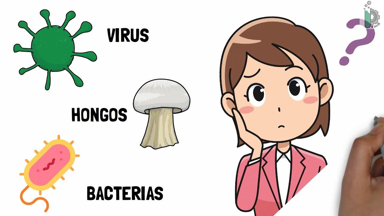 Download Diferencias entre virus ☣, bacterias 🦠y hongos 🍄  Video animado y con ejemplos 
