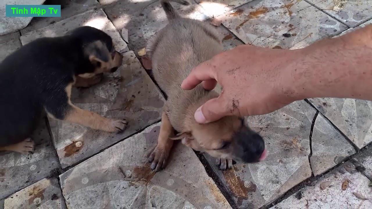 Con Chó Con Bụng To Nhìn Cưng Thiệt | Tính Mập Tv