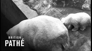 Baby Polar Bear (1967)