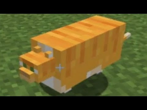 C418 - Cat played over cursed images of cats