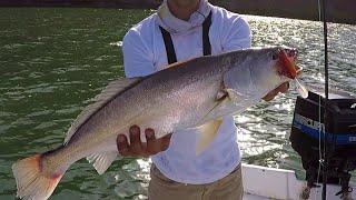 Buena CURVINA al troleo || Pesca en Topolobampo