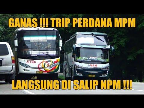 GANAS !!! BUS NPM MENYALIP SI ANAK BARU BUS MPM !!! DI SITINJAU LAUIK !!!