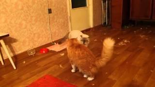 Коты-убийцы. Самое отпадное видео!!! Cats-killers. Very funny :)))