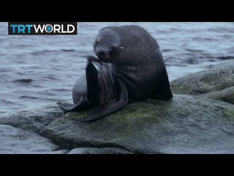 Turkey's Antarctic Mission: Pollution changing Antarctica's ecosystem