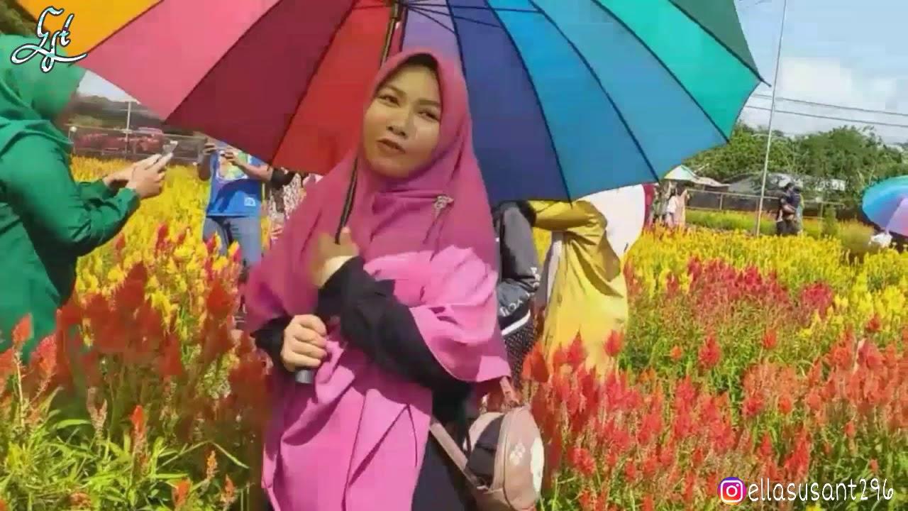 Wisata bunga aceh jaya