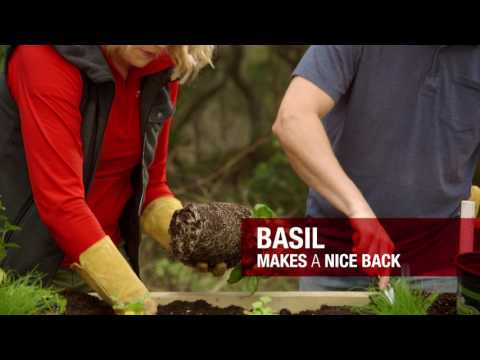 How to Select and Plant Herbs | Troy-Bilt®
