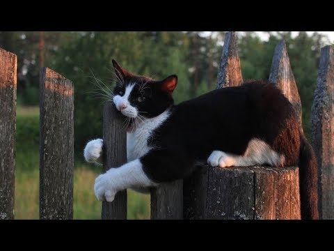 These CLUMSY CATS will make you LOSE this TRY NOT TO LAUGH CHALLENGE - Funny CAT compilation