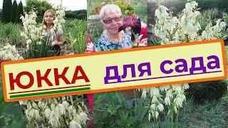 Юкка нитчатая (Yucca filamentosa) садовая, уход, размножение и пересадка(Цветы. Юкка нитчатая садовая (Yucca filamentosa) - уход и размножение. Пересадка Юкки. Неприхотливое засухо- и морозо..., 2016-04-24T18:24:34.000Z)