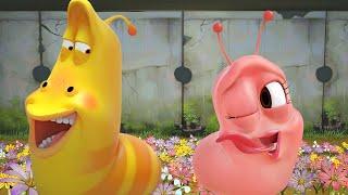 LARVA | Amor rosa | Dibujos animados para niños | WildBrain