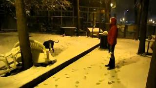 Seattle Snow at the Dog Park