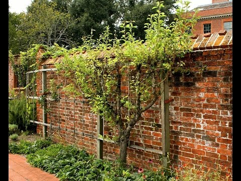 Шпалеры для вьющихся растений в саду