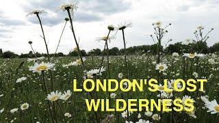 london s lost wilderness marsh lane fields