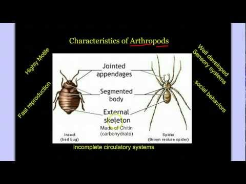Invertebrate Diversity Part 3: Introduction to Arthropods