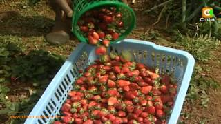 Smart Farm:  Strawberry Farming
