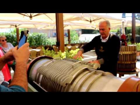 Wine Tasting in Tuscany with Wine Production