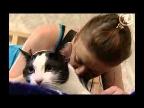 Вопрос: Чем может заразить человека уличная кошка?