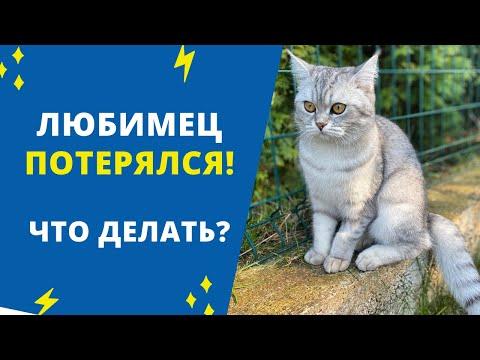 Пропала собака. Пропала кошка. Что делать? Как найти быстро?    Я Майя, и я потерялась   