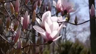 Красота природы и красивая музыка. Beauty of Nature