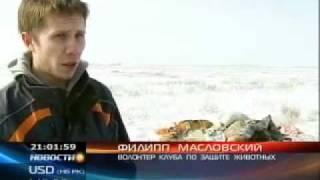 КТК: Живодёры убивают породистых собак