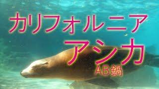 癒しの自然音動物編,カリフォルニアアシカ,ヒーリング動画