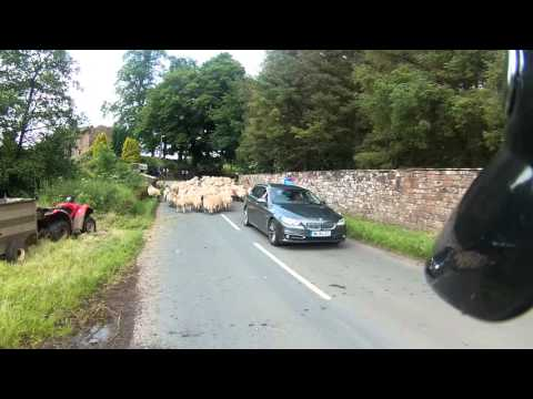 Chasing Sheep Is Best Left To Shepherds