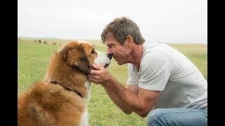 Собачья жизнь 2 - Трейлер (2019)