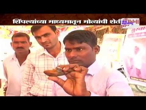 PALVI: Pearl Farming in Gadchiroli, New experiment in farming
